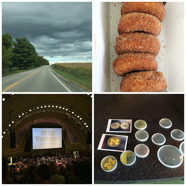 Top Left: a road in Michigan; Top Right: Cider mill donuts; Bottom Left: the stage of Hill Auditorium; Bottom Right: bacteria in petri dishes