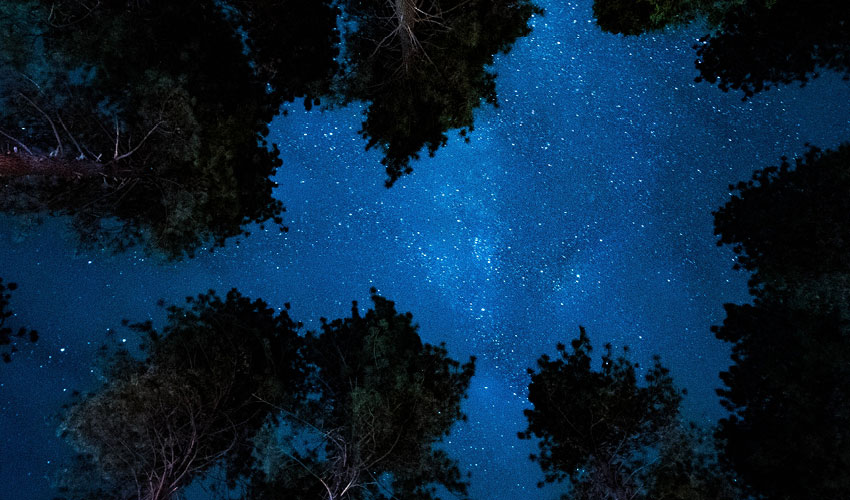 looking up to the night sky and stars through trees